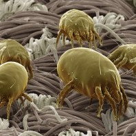 treatment of duct mites and allergens